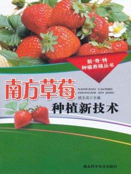 南方草莓种植新技术