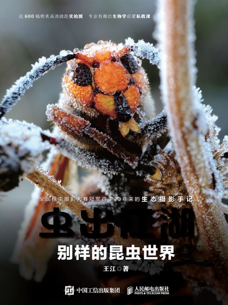 虫出江湖:别样的昆虫世界