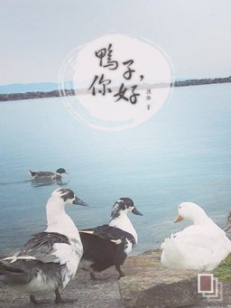 鸭子,你好(千种豆瓣高分原创作品·看小说)