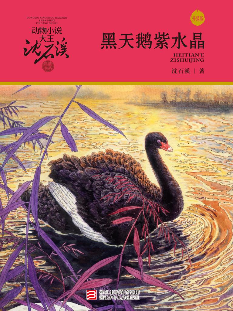 黑天鹅紫水晶(升级版 动物小说大王沈石溪·品藏书系)