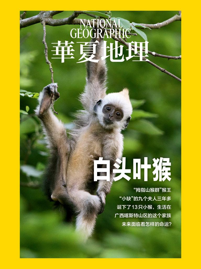 华夏地理·白头叶猴