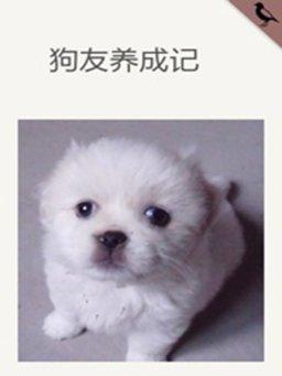 狗友养成记(千种豆瓣高分原创作品·懂生活)