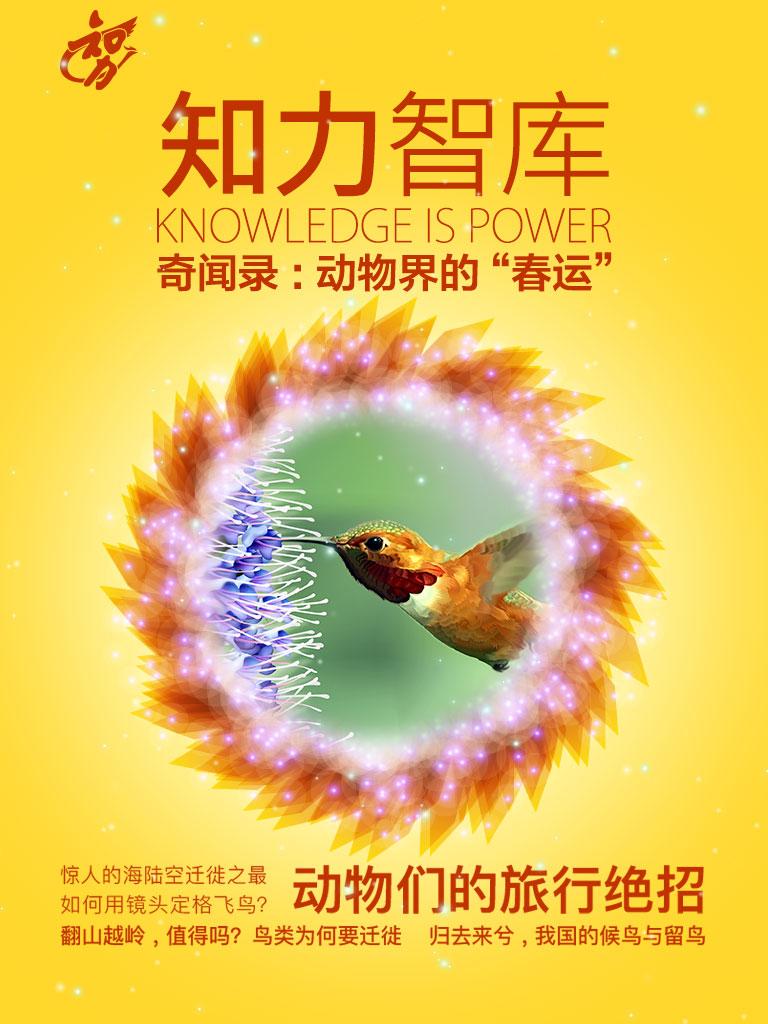 """知力智库·奇闻录:动物界的""""春运"""""""