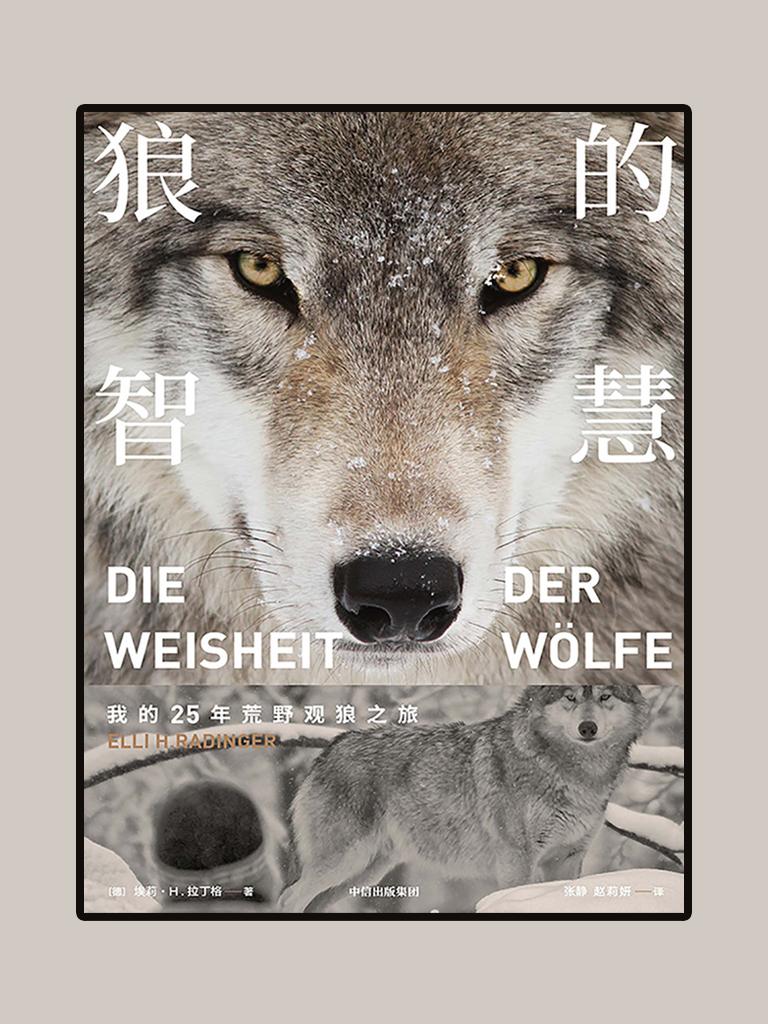 狼的智慧:一部实地观察、启迪人心的动物之书,给每个困顿于水泥丛林都市人的自然慰藉