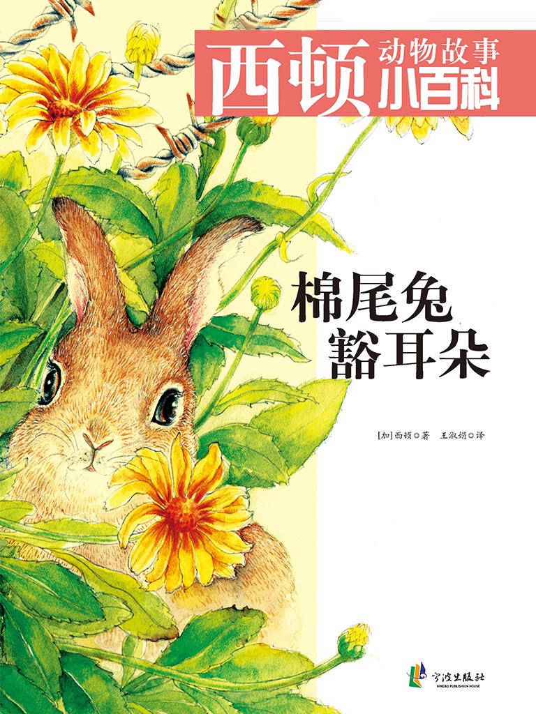 棉尾兔豁耳朵