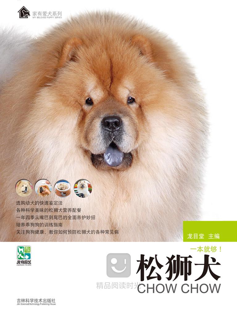 家有爱犬:松狮犬